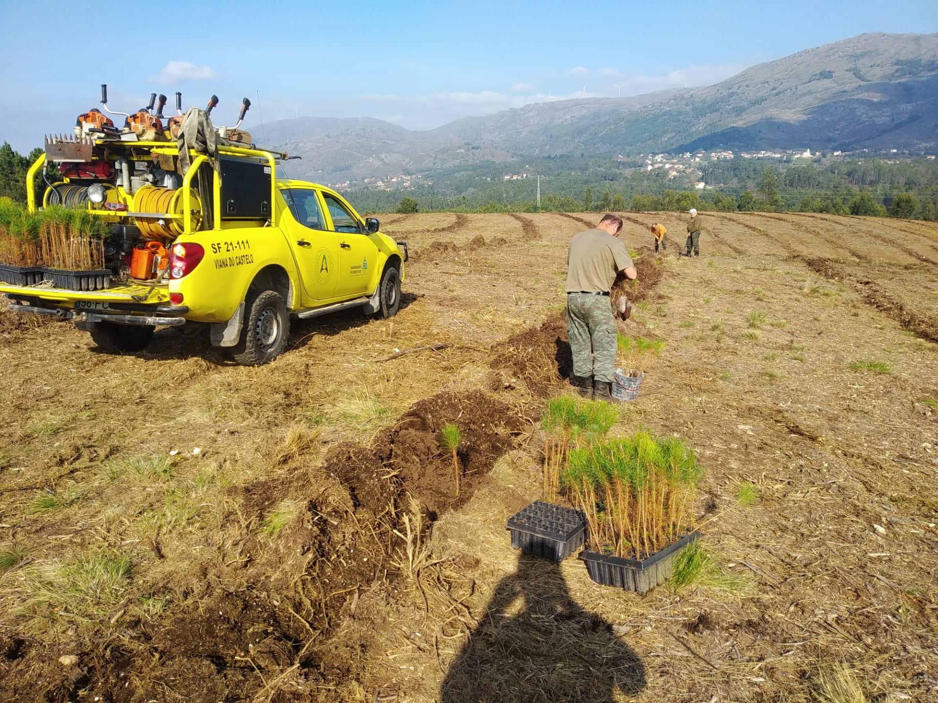 Sapadores Florestais: sindicato alerta para a necessidade de uma maior fiscalização e de aumentos salariais para que a profissão não se extinga