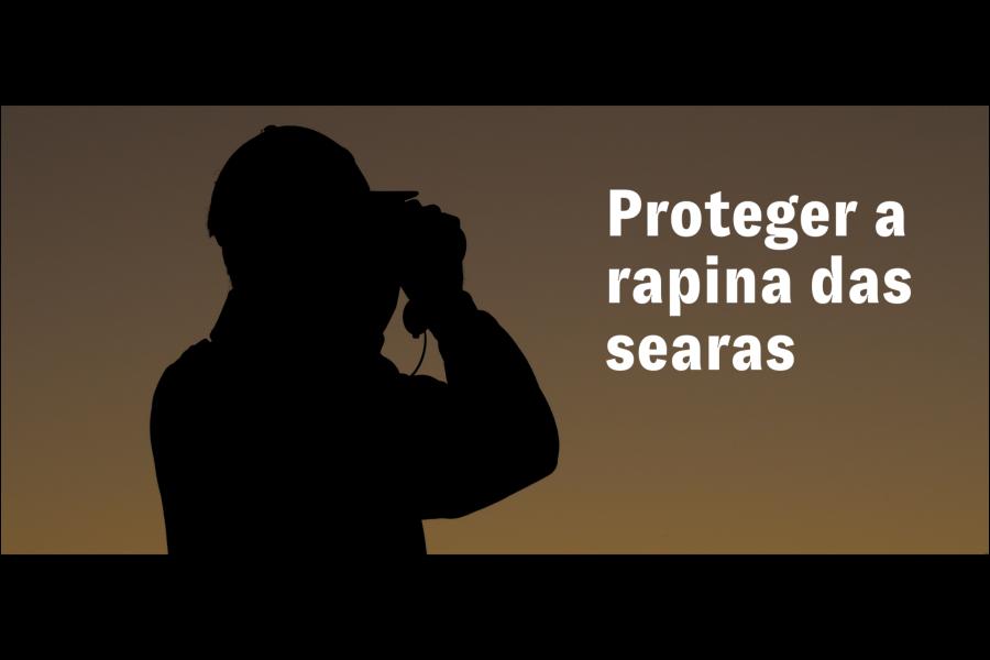 Documentário sensibiliza para importância de proteger o tartaranhão-caçador e os serviços que presta aos ecossistemas