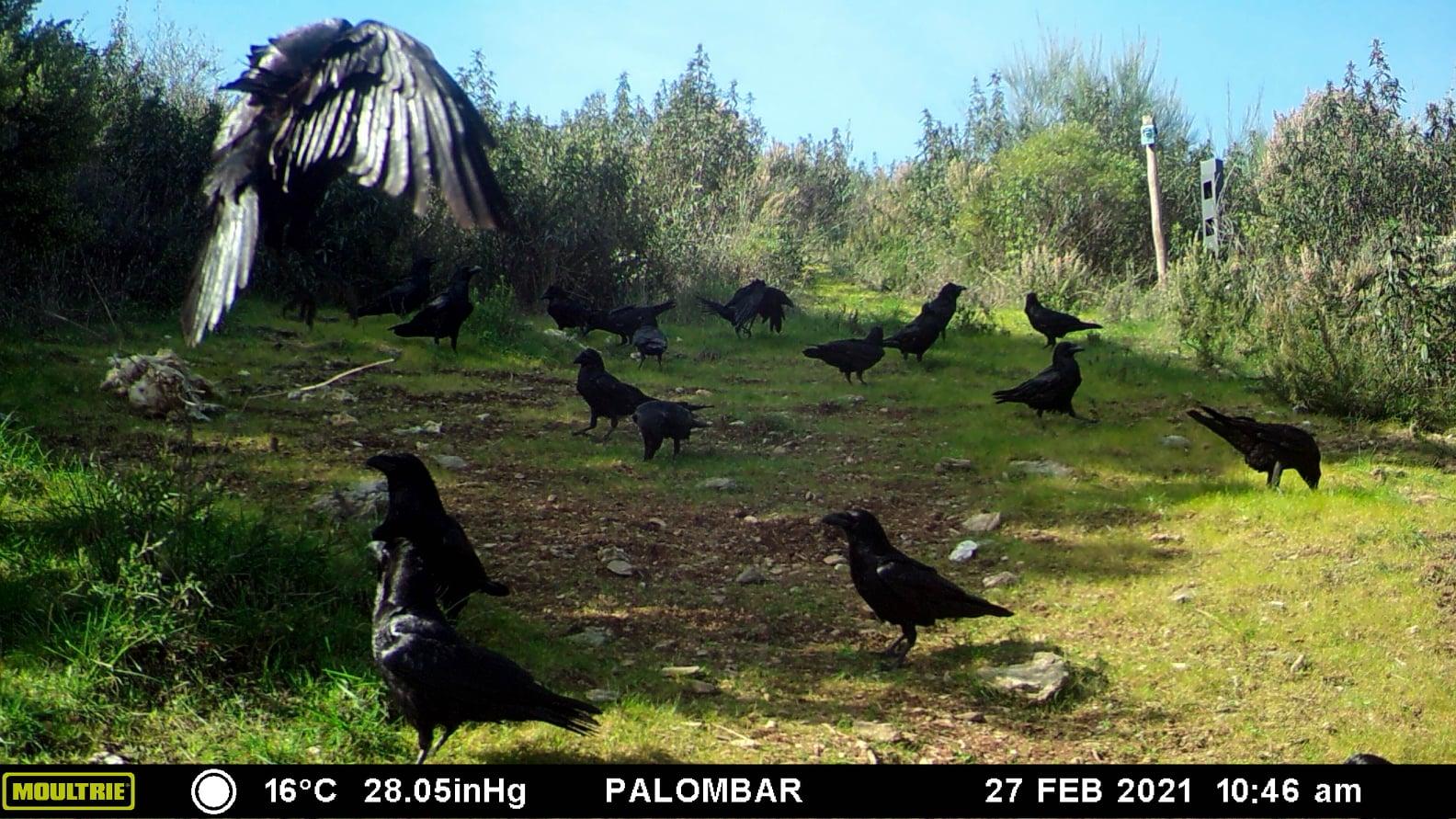 O banquete dos corvos