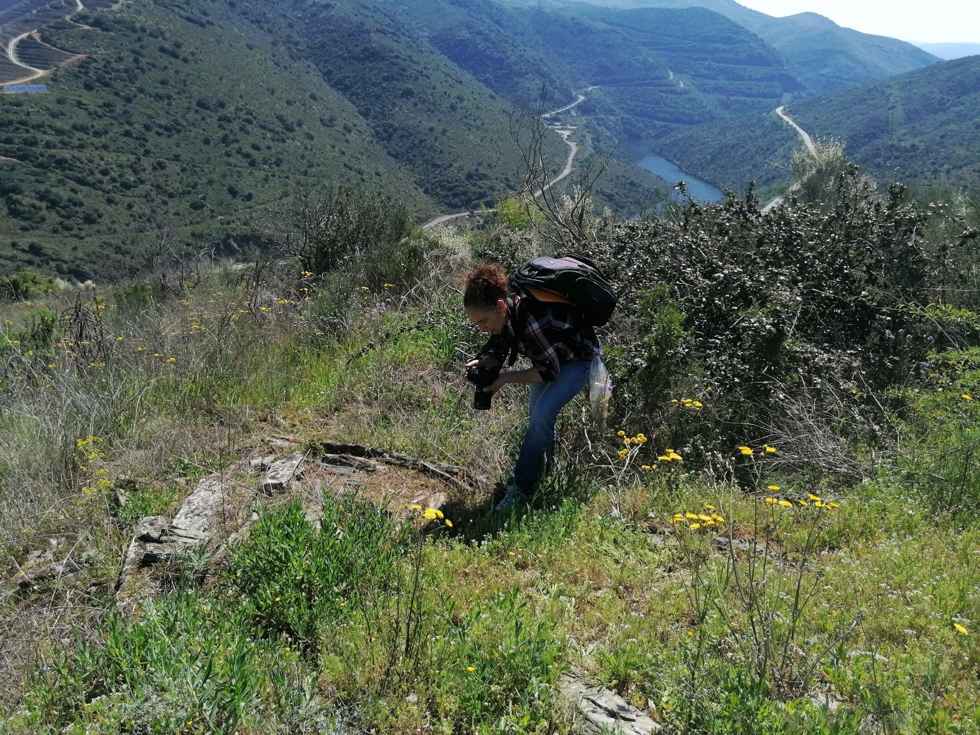 Começaram as saídas de campo do projeto que vai estudar as plantas medicinais do Vale do Côa
