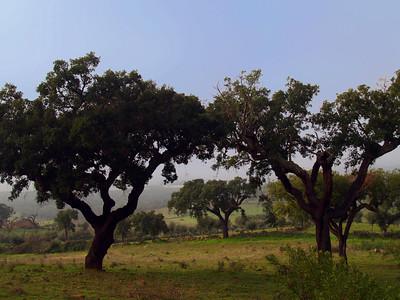 50 mil árvores distribuídas numa iniciativa do ICNF para celebrar o Dia Internacional da Floresta