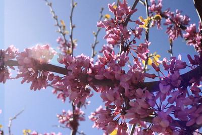 Pelas primaveras que estão para vir, vamos pensar na floresta, na poesia e na água