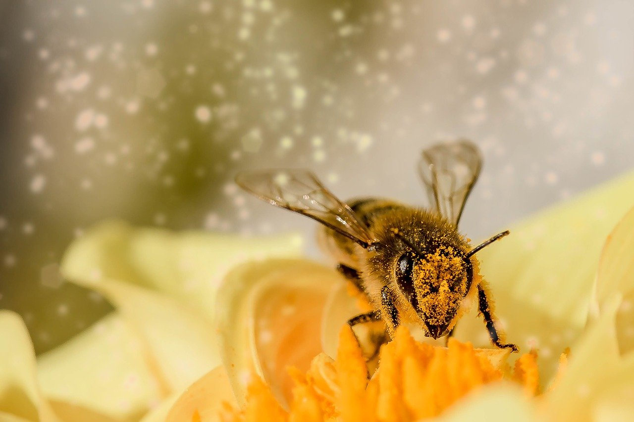 Produção de mel com quebras de 40 a 50% devido à vespa velutina