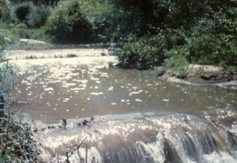 """proTEJO partilha carta aberta ao Ministro do Ambiente """"pela despoluição do afluentes do rio Tejo"""""""