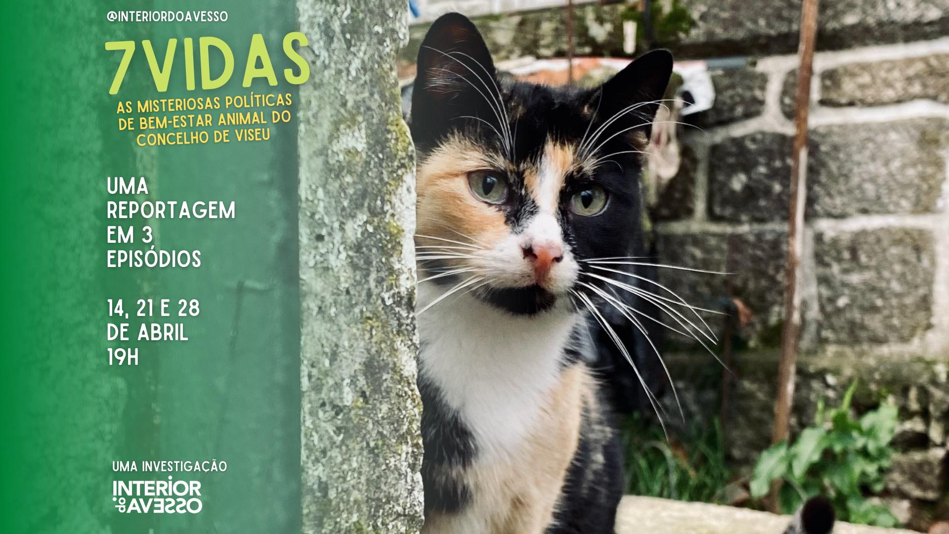 7 VIDAS: As misteriosas políticas de bem-estar animal do concelho de Viseu