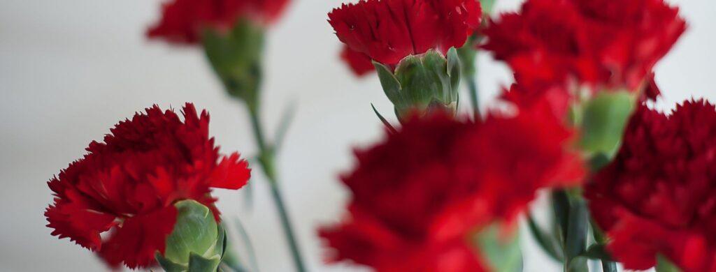 Cravos Vermelhos (2)
