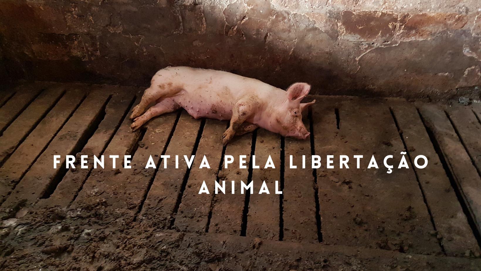 FALA no ativismo pela Libertação Animal em Viseu