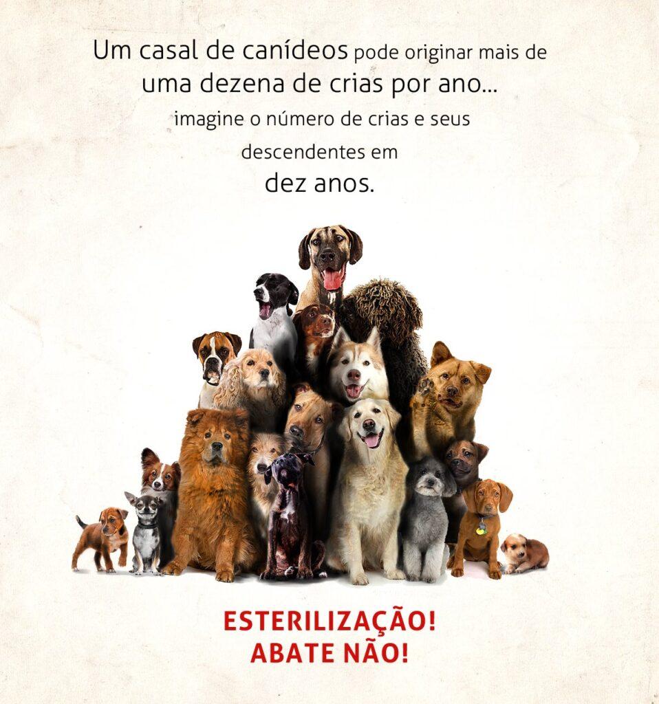 Campanha Esterilização de Animais Abandonados