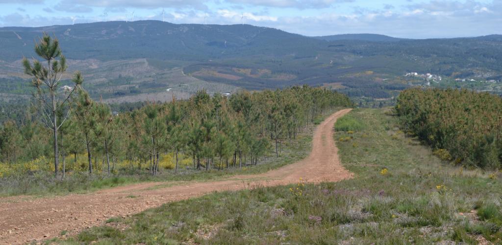 Imagem do perímetro florestal de São Salvador onde está previsto ser instalada a Central Fotovoltaica de Lupina