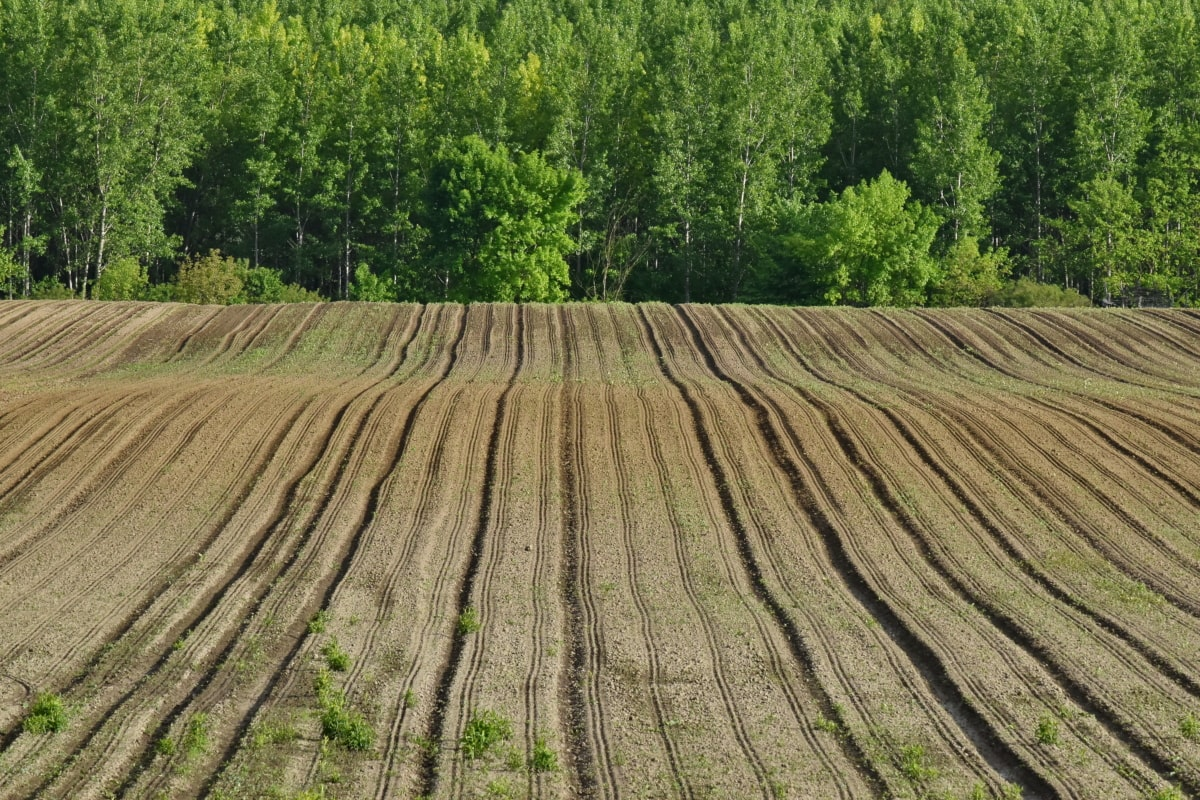 Agricultura: aprovado apoio à eletricidade, mas desprezada a transição energética