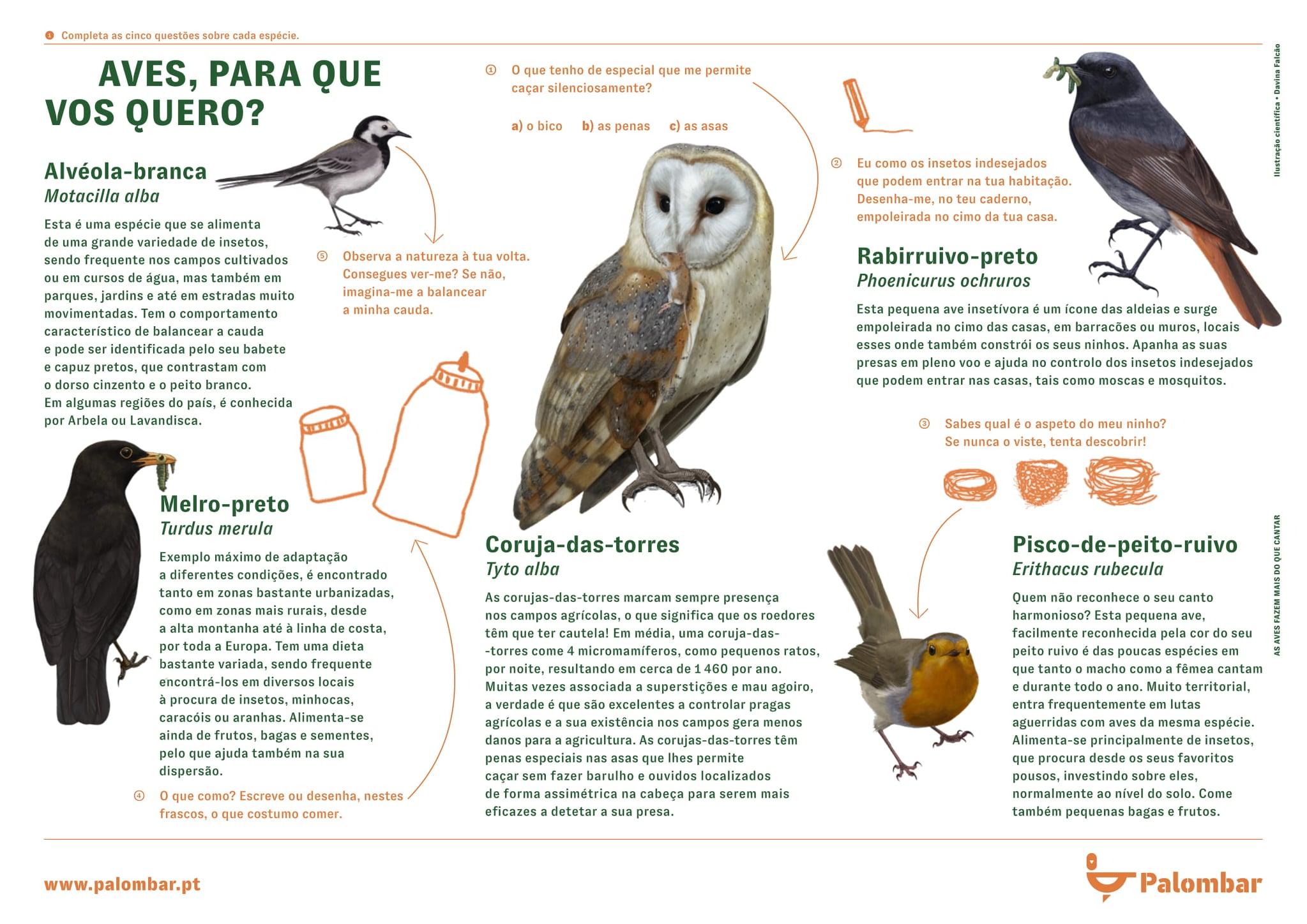Reconecta-te à Natureza – As aves fazem mais do que cantar