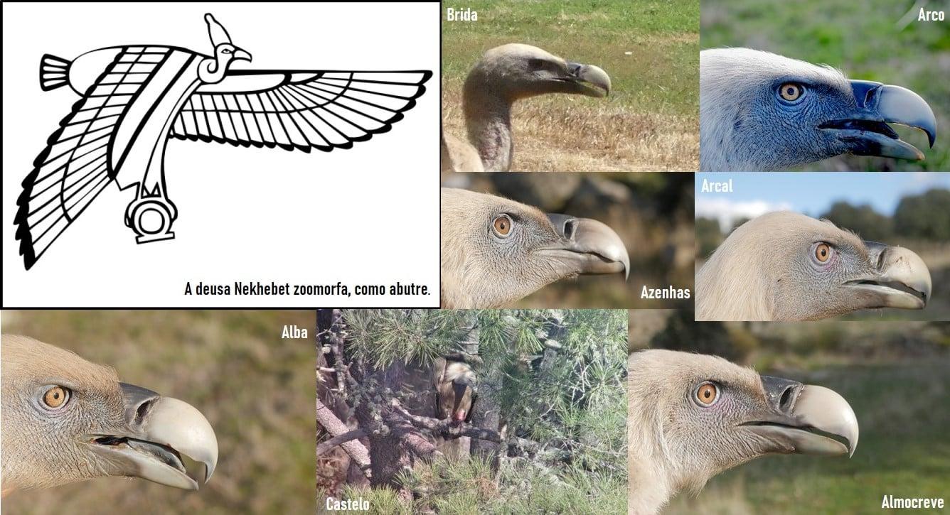 """A deusa-abutre """"Senhora do Céu Meridional"""" e os grifos-sentinelas protetores da fauna selvagem"""