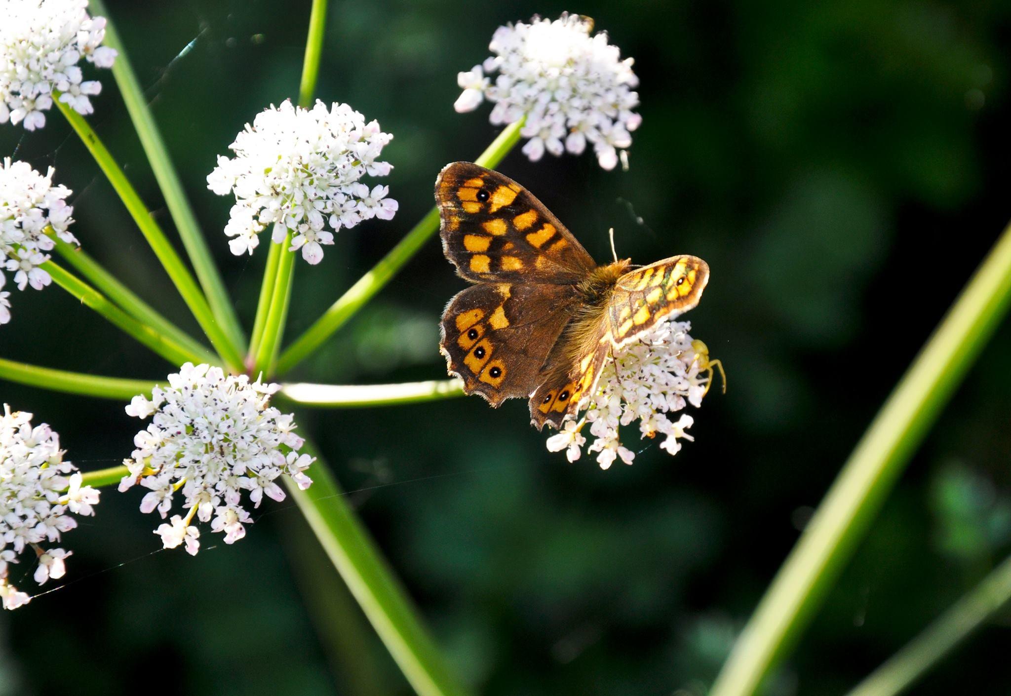 Hoje é o Dia da Ecologia #EcologyDay